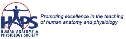 Anatomy And Physiology Glossary Haps Institute Home Page Human Anatomy And Physiology Society