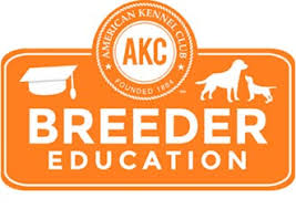 afghan hound giving birth dog pregnancy signs care and preparation american kennel club