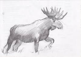 drawn moose sketch pencil and in color drawn moose sketch