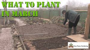 what to plant in your allotment during march uk easy peasy