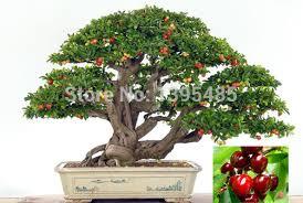 mini trees craftbnb