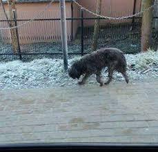 si e psa poszukiwany właściciel błąkającego się psa 10 01 2018