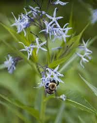 missouri native plants local horticulturist focuses on pollinator friendly flowers