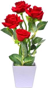 naturo bonsai imported red rose plant seed price in india buy