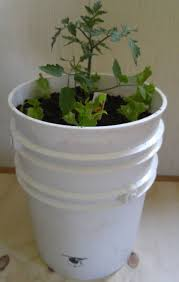 How To Make Self Watering Planters by How To Make Quick And Inexpensive Self Watering Pots Rodale U0027s