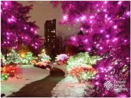 denver botanic gardens blossoms of light youtube