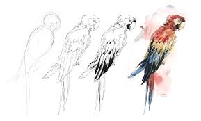 pictures images of birds for sketching drawing art gallery