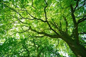 how many trees are there in the world scientific american
