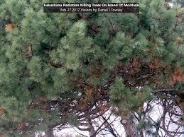 Fukushima Radiation Map The Fukushima Radiation Tree Reports On Going Nuclear Apocalypse