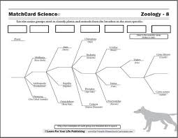 biological classification worksheet worksheets
