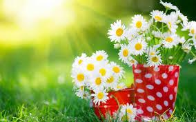 Nice Flowers Beautiful Flowers Hd Desktop Wallpapers Wallpapers Z