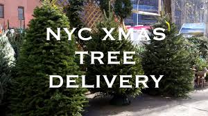 christmas tree delivery christmas tree delivery nyc sohotrees trees for sale