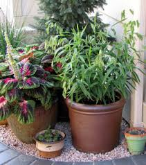 container gardening with ornamental grasses