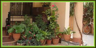 beginners herb garden ideas
