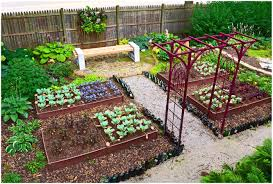 full image for fascinating vegetable garden layout ideas and