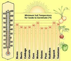 organic gardening vegetables the old farmer u0027s almanac