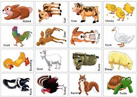 15 animal flash cards baby