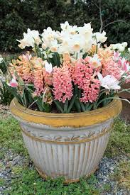 5 prime spots to beautify your yard with flower bulbs u2022 preen