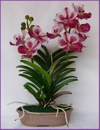 orchids care vanda orchids care orchid vanda orchids growing