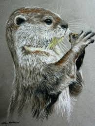 doodle study sea otter by ethe deviantart com on deviantart