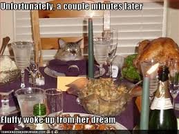 the eco cat speaks thanksgiving every day