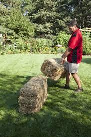 learn to grow a straw bale garden gardening know how u0027s blog
