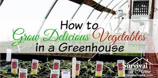 Types Of Vegetables To Grow In A Garden - how to grow vegetables in a greenhouse