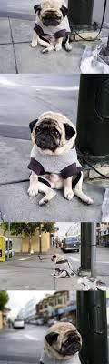 Depressed Pug Meme - depressed pug is depressed quickmeme