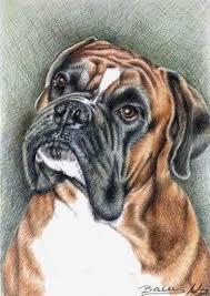boxer dog art boxer art print signed by artist dj rogers taps fur and chang u0027e 3