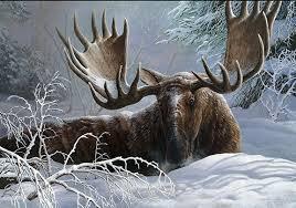 Kentucky wildlife images Kentucky national wildlife exhibit ohio valley art league jpg