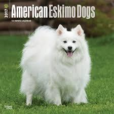 american eskimo dog small calendars and more