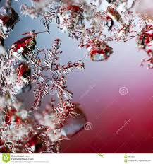 a real snowflake macro lies among other snowflakes on a red