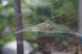 a cone spider web the squirrel nutwork