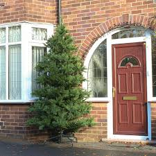 outdoor christmas trees buy now from festive lights