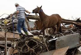 Texas how far can a horse travel in a day images Tragic sight of dead horses piled high as farmers return to find jpg