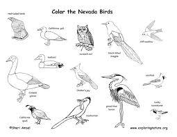 Nevada birds images Nevada habitats mammals birds amphibians reptiles jpg