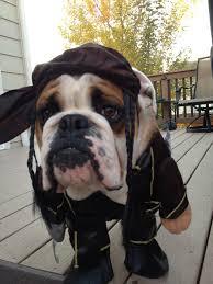 english bulldog news forums english bulldog halloween costume