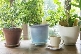 100 bringing plants indoors it u0027s time for your