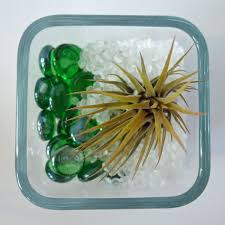 air plant terrariums with poly pellets fairfield world craft