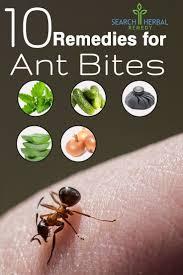 best 25 ant remedies ideas on pinterest natural bug killer