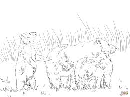 grizzly bear with two cute cubs coloring page free printable