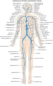 15 best circulatory system images on pinterest circulatory