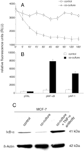 macrophages induce invasiveness of epithelial cancer cells via nf