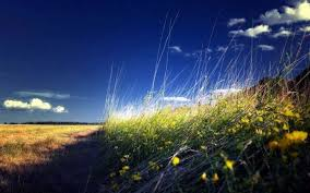 blue morning wallpapers field nature sky morning flowers wildflowers wall grass blue