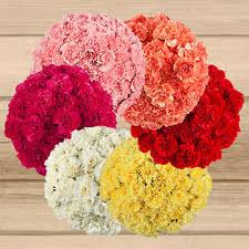 bulk carnations carnations white bulk flowers costco