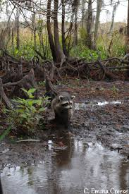 Louisiana wildlife tours images A louisiana bayou swamp tour our incredible experience JPG