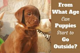 when can puppies go outside after vaccinations at a certain age