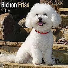 bichon frise quilt amazon com bichon frise calendar 2018 dog breed calendar