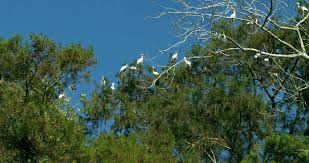 Louisiana slow travel images Louisiana swamp wetlands bayou egret bird feeding on crawfish png