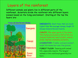 Under Canopy Rainforest by Rainforests As Habitats Ppt Download
